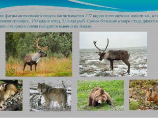 В составе фауны автономного округа насчитывается 227 видов позвоночных животн