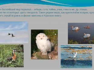В округе богатейший мир пернатых - лебеди, гуси, чайки, утки, совы и мн. др.