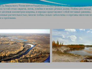 Поверхность Ямальского, Тазовского и Гыданского полуостровов, особенно прибре