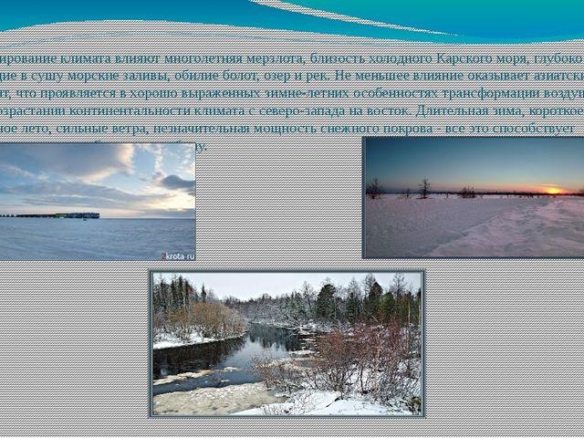 На формирование климата влияют многолетняя мерзлота, близость холодного Карск...