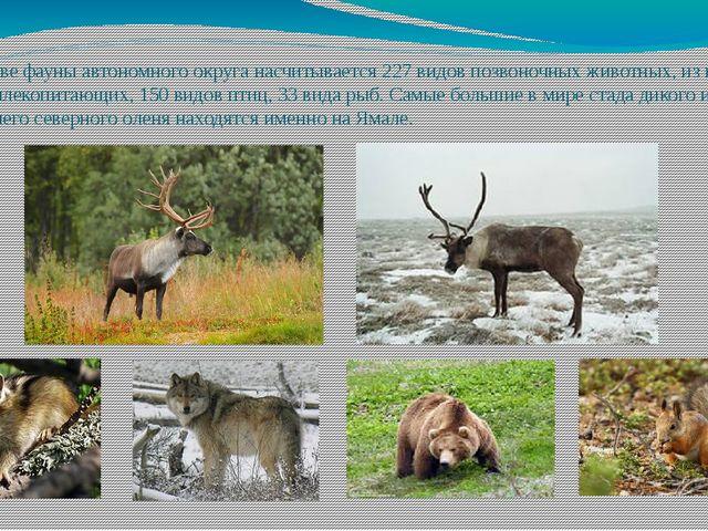 В составе фауны автономного округа насчитывается 227 видов позвоночных животн...