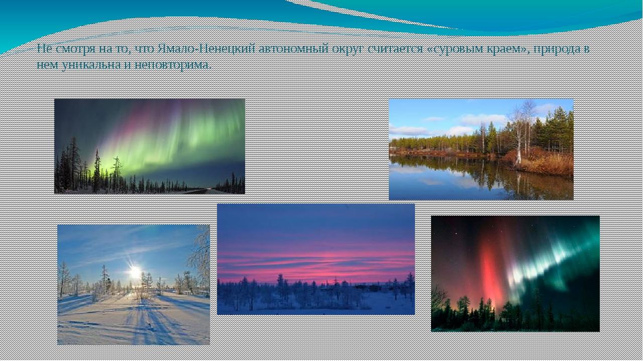 Не смотря на то, что Ямало-Ненецкий автономный округ считается «суровым краем...