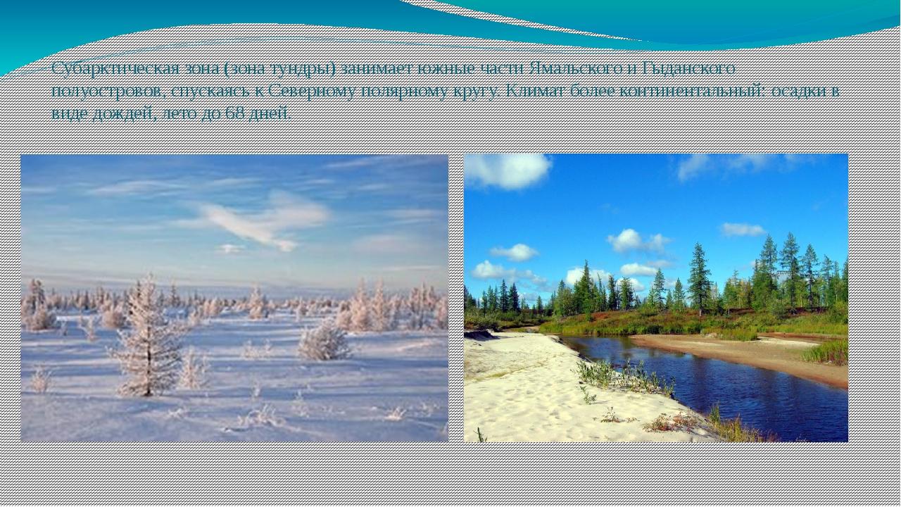 Субарктическая зона (зона тундры) занимает южные части Ямальского и Гыданског...