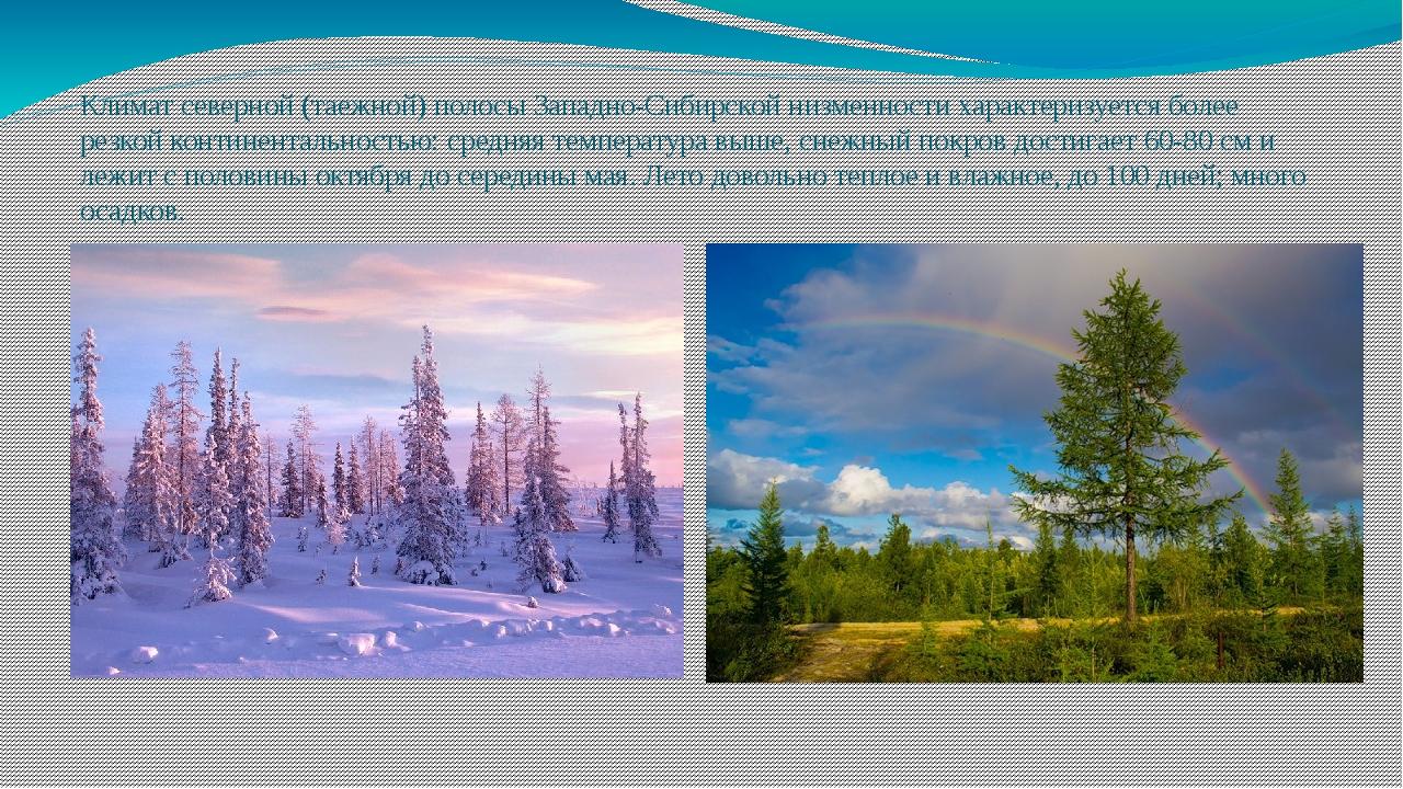 Климат северной (таежной) полосы Западно-Сибирской низменности характеризуетс...