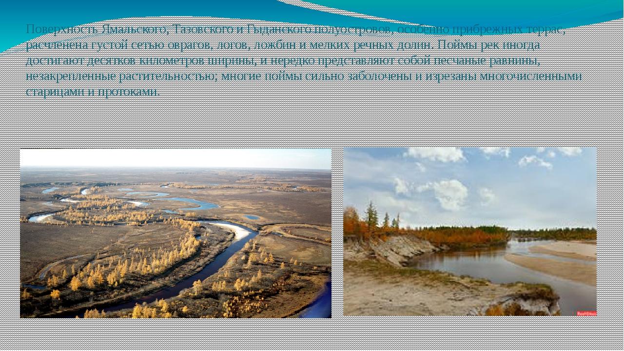 Поверхность Ямальского, Тазовского и Гыданского полуостровов, особенно прибре...