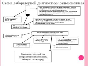 Биохимические свойства: сахаролитическая активность, образуют сероводород. Сх