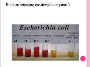 Ферментируют с образованием кислоты и газа – глюкозу, лактозу, маннит, не ра