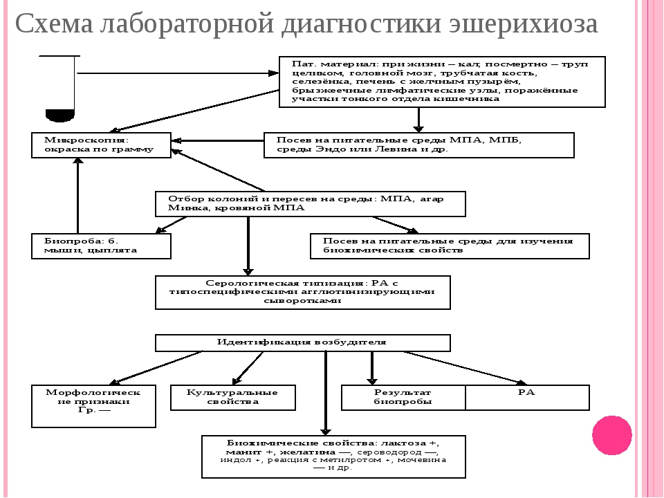 Схема лабораторной диагностики эшерихиоза