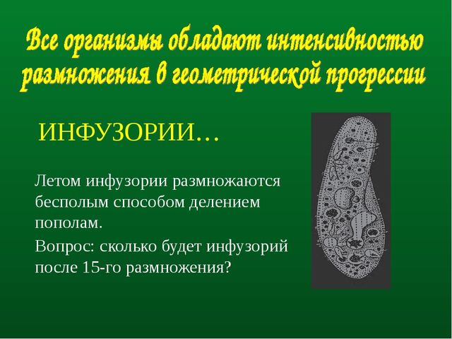 ИНФУЗОРИИ… Летом инфузории размножаются бесполым способом делением пополам....