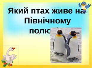 Який птах живе на Північному полюсі?