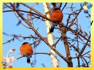 У червонім фартушку птах стрибає по сніжку і розпитує синичку про найближчу