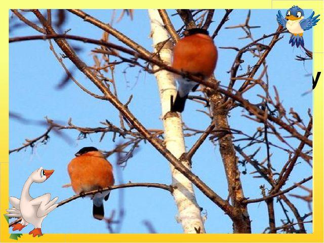 У червонім фартушку птах стрибає по сніжку і розпитує синичку про найближчу...
