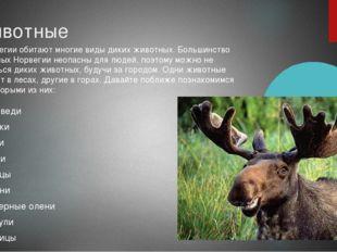 Животные медведи белки лоси рыси зайцы олени северные олени косули лисицы вол