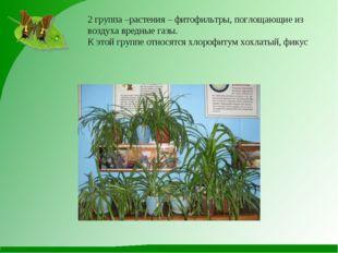 2 группа –растения – фитофильтры, поглощающие из воздуха вредные газы. К этой
