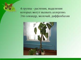 4 группа - растения, выделения которых могут вызвать аллергию. Это олеандр, м