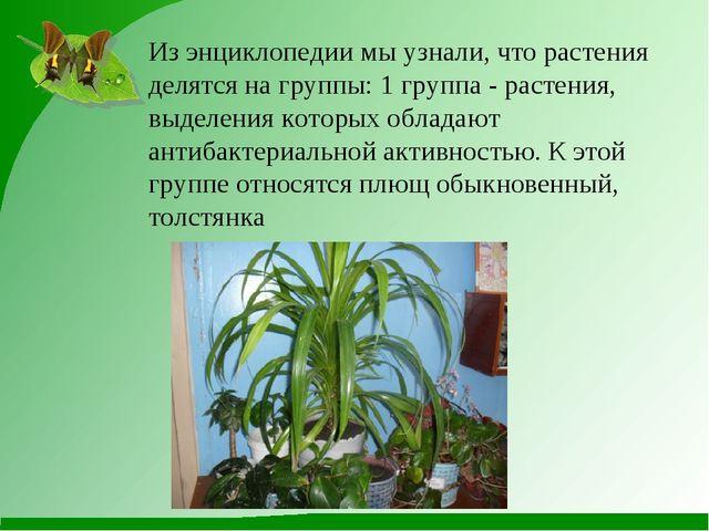 Из энциклопедии мы узнали, что растения делятся на группы: 1 группа - растени...