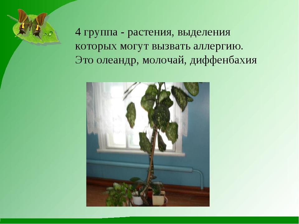 4 группа - растения, выделения которых могут вызвать аллергию. Это олеандр, м...