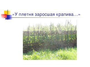 «У плетня заросшая крапива…»