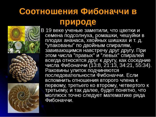 Соотношения Фибоначчи в природе В 19 веке ученые заметили, что цветки и семен...