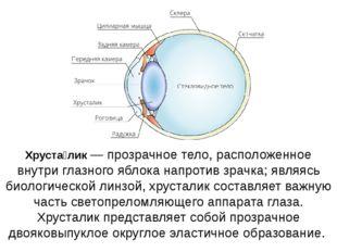 Хруста́лик — прозрачное тело, расположенное внутри глазного яблока напротив з