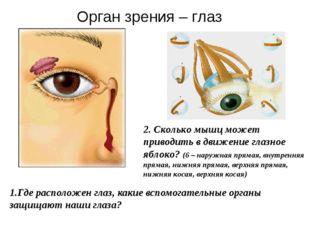 1.Где расположен глаз, какие вспомогательные органы защищают наши глаза? 2. С