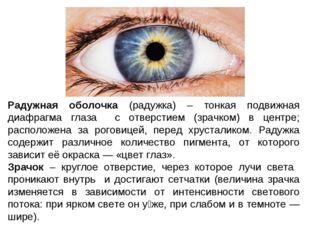 Радужная оболочка (радужка) – тонкая подвижная диафрагма глаза с отверстием (