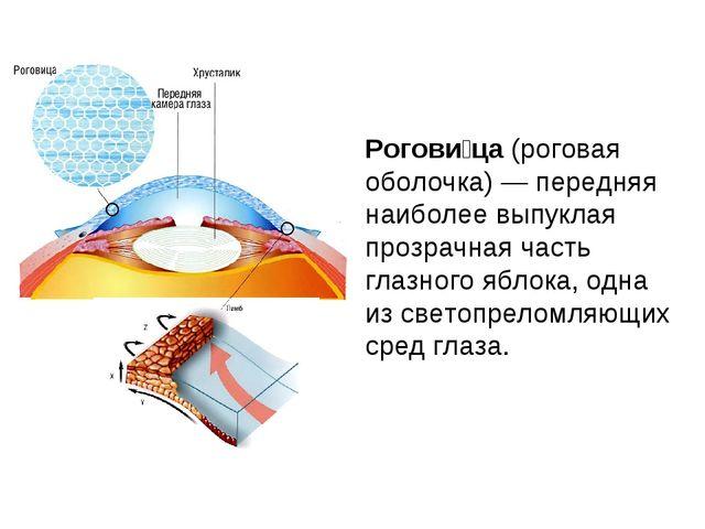 Рогови́ца (роговая оболочка) — передняя наиболее выпуклая прозрачная часть гл...