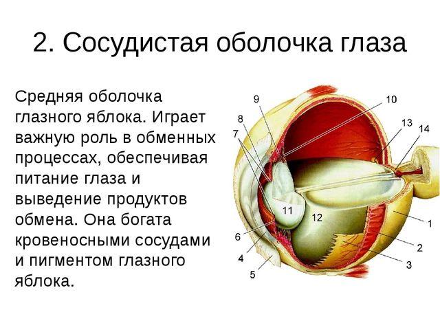 2. Сосудистая оболочка глаза Средняя оболочка глазного яблока. Играет важную...