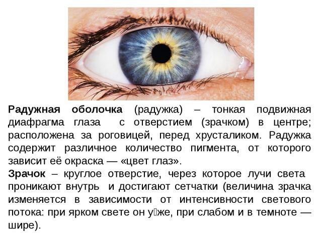 Радужная оболочка (радужка) – тонкая подвижная диафрагма глаза с отверстием (...