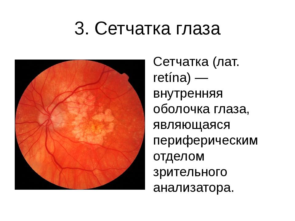 3. Сетчатка глаза Сетчатка (лат. retína) — внутренняя оболочка глаза, являюща...