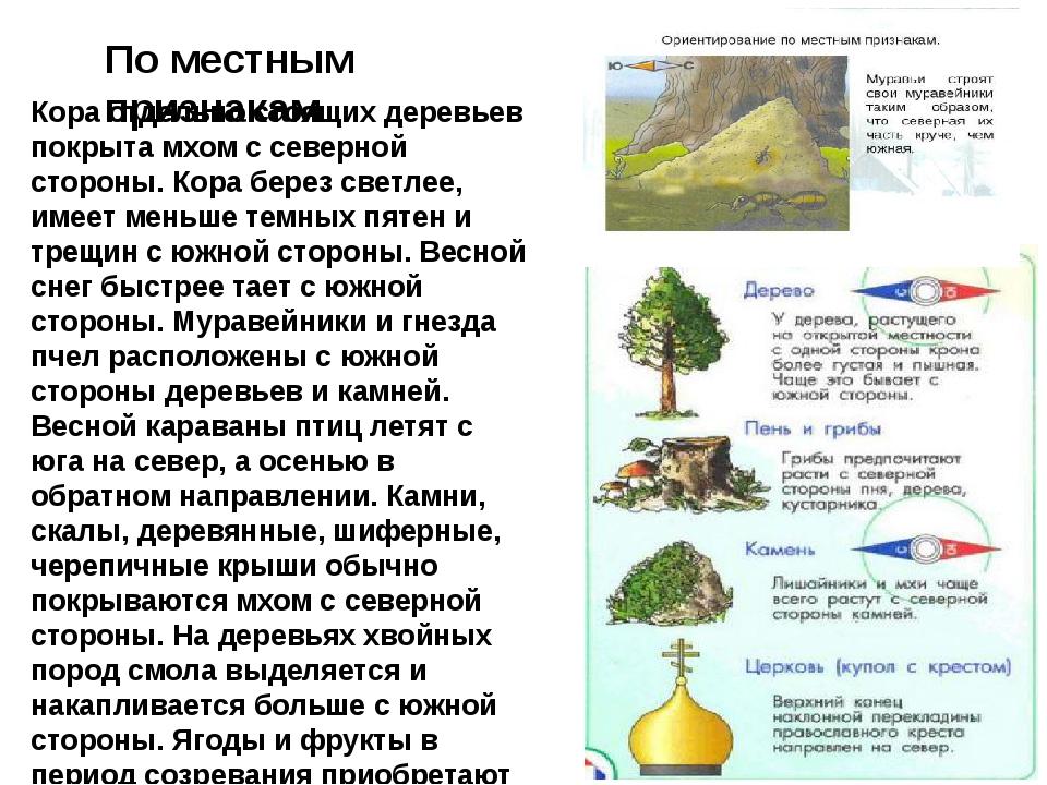 По местным признакам Кора отдельно стоящих деревьев покрыта мхом с северной с...