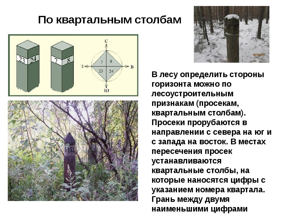 По квартальным столбам В лесуопределить стороны горизонта можно по лесоустро...