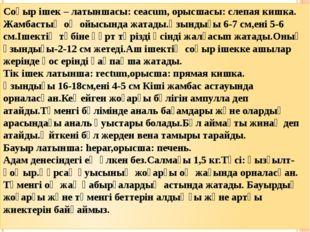 Соқыр ішек – латыншасы: ceacum, орысшасы: слепая кишка. Жамбастың оң ойысында