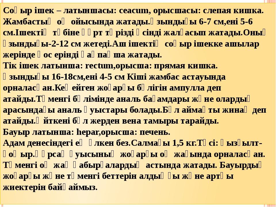 Соқыр ішек – латыншасы: ceacum, орысшасы: слепая кишка. Жамбастың оң ойысында...