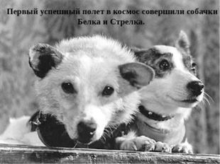 Первый успешный полет в космос совершили собачки Белка и Стрелка.