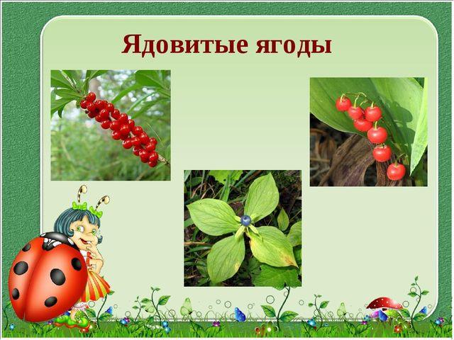 Ядовитые ягоды