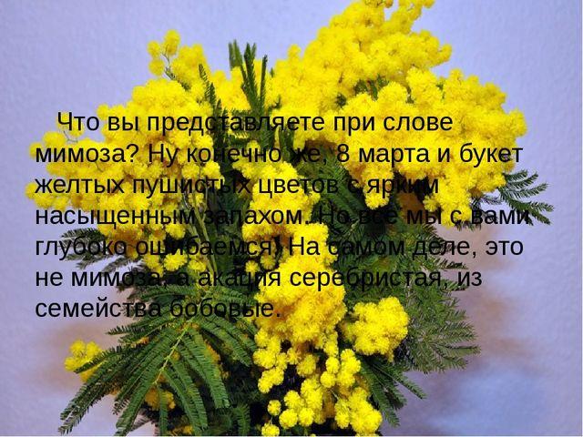 Что вы представляете при слове мимоза? Ну конечно же, 8 марта и букет желтых...