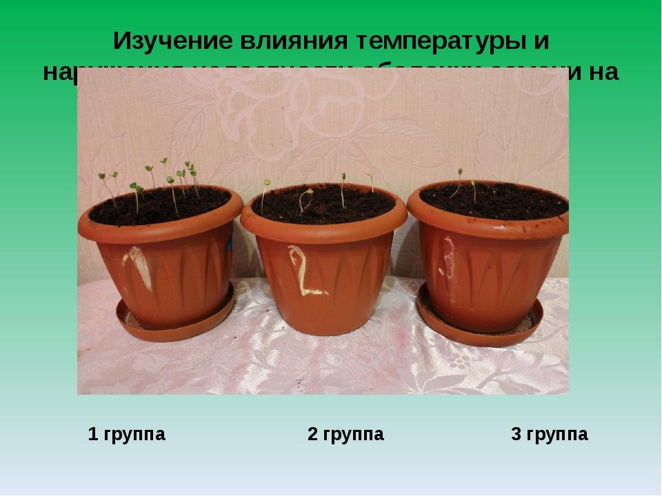 Изучение влияния температуры и нарушения целостности оболочки семени на всхож...