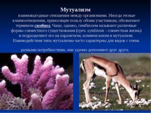 МУТУАЛИЗМ Мутуализм взаимовыгодные отношения между организмами. Иногда тесные