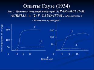 Опыты Гаузе (1934) Рис. 2. Динамика популяций инфузорий (1) PARAMECIUM AURELI