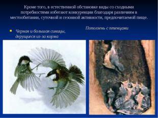 Кроме того, в естественной обстановке виды со сходными потребностями избегают