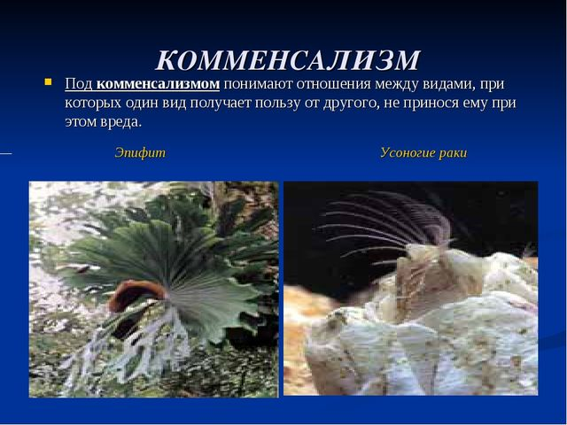 КОММЕНСАЛИЗМ Под комменсализмом понимают отношения между видами, при которых...