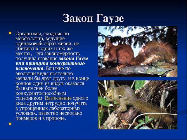 Закон Гаузе Организмы, сходные по морфологии, ведущие одинаковый образ жизни,...