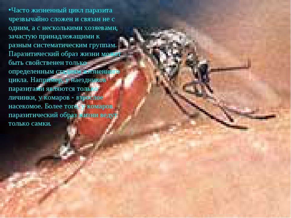 Часто жизненный цикл паразита чрезвычайно сложен и связан не с одним, а с нес...
