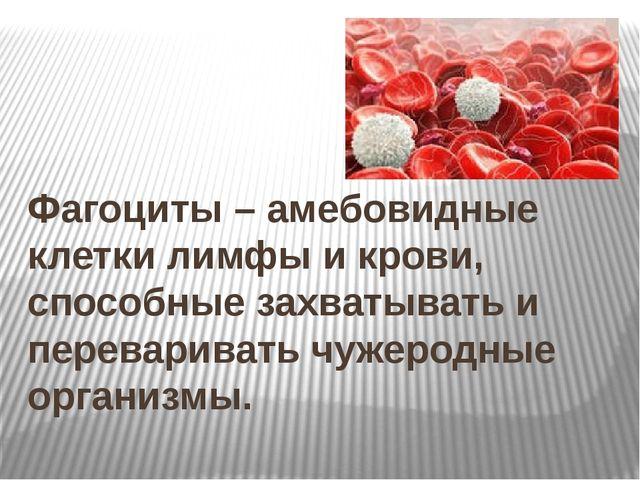 Фагоциты – амебовидные клетки лимфы и крови, способные захватывать и перевар...