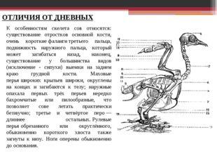 ОТЛИЧИЯ ОТ ДНЕВНЫХ К особенностям скелета сов относятся: существование отрост