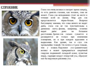 Глаза сов очень велики и смотрят прямо вперёд, то есть двигать глазами, как ч