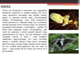 ОХОТА Полёт сов беззвучен и позволяет им совершенно незаметно подлетать к спя