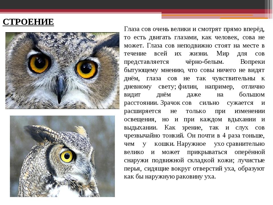 Глаза сов очень велики и смотрят прямо вперёд, то есть двигать глазами, как ч...
