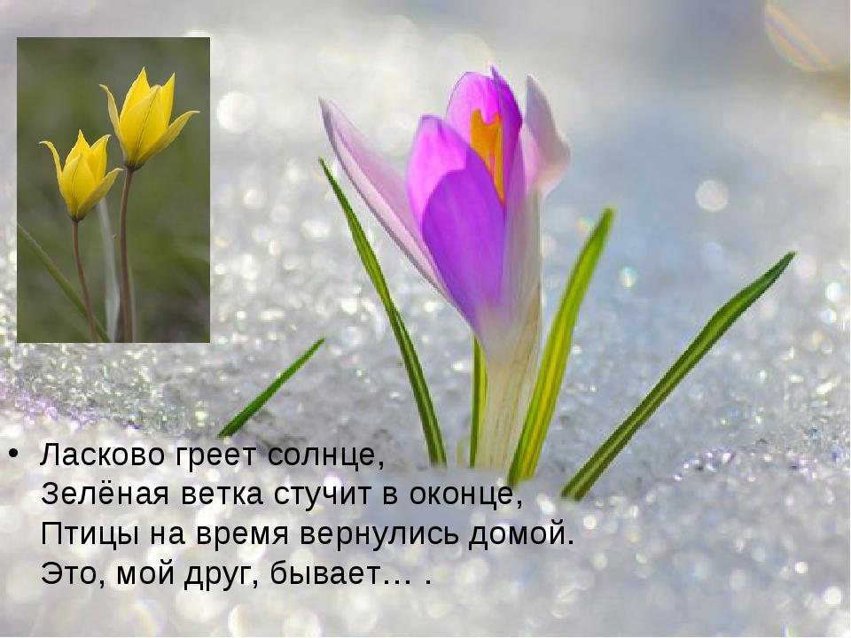 Ласково греет солнце, Зелёная ветка стучит в оконце, Птицы на время вернулись...